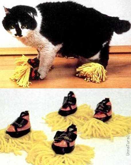 кот-уборщик